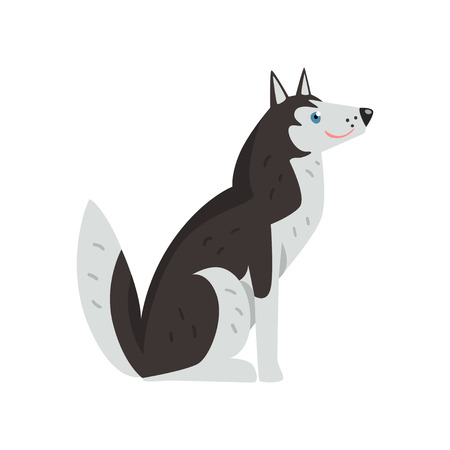 Freindly siberian husky dog character vector Illustrations isolated on a white background.
