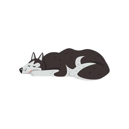 Siberian husky dog character sleeping vector Illustrations isolated on a white background.