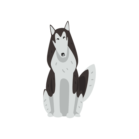 Siberian husky dog character sitting, purebred dog vector Illustrations isolated on a white background.