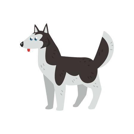 Siberian husky dog character, purebred dog vector Illustrations isolated on a white background. Illusztráció