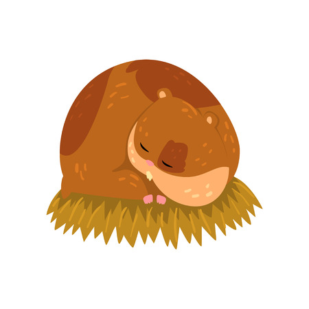 Cute cartoon hamster character sleeping on the straw, funny brown rodent animal pet vector Illustration on a white background Illustration
