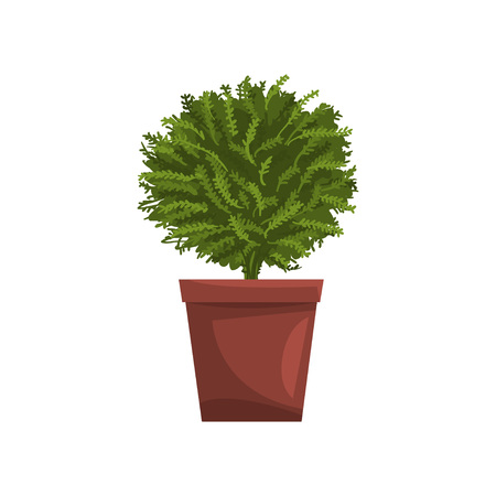 Green indoor house plant in brown pot, element for decoration home interior vector Illustration on a white background