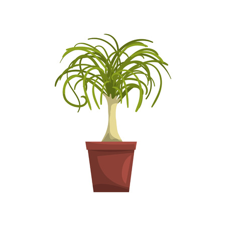Dracaena indoor house plant in brown pot, element for decoration home interior vector Illustration on a white background