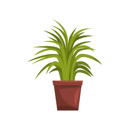 Green decorative deciduous indoor house plant in brown pot, element for decoration home interior vector Illustration on a white background