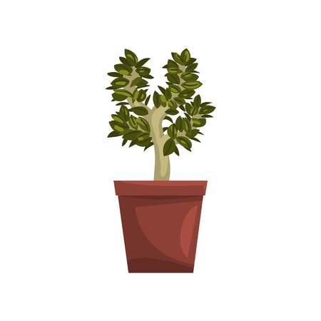 Bonsai tree indoor house plant in brown pot, element for decoration home interior vector Illustration on a white background