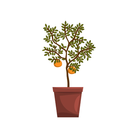 Kumquat indoor house plant in brown pot, element for decoration home interior vector Illustration on a white background Иллюстрация