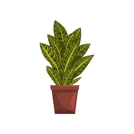Codicium indoor house plant in brown pot, element for decoration home interior vector Illustration on a white background