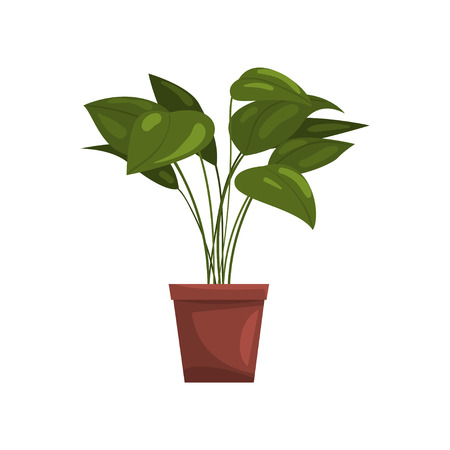 House plant in brown pot, element for decoration home interior vector Illustration on a white background