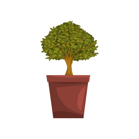 Portulacaria indoor house bonsai tree in brown pot, element for decoration home interior vector Illustration on a white background