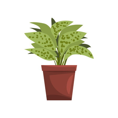 Dieffenbachia indoor house plant in brown pot, element for decoration home interior vector Illustration on a white background Illustration