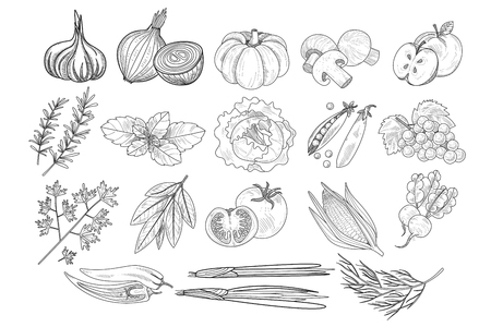 Vector set of fruits, vegetables and herbs in sketch style. Onion, pumpkin, mushrooms, apple, cabbage, peas, corn, grapes, parsley, tomato, beets, leek, pepper, rosemary, dill