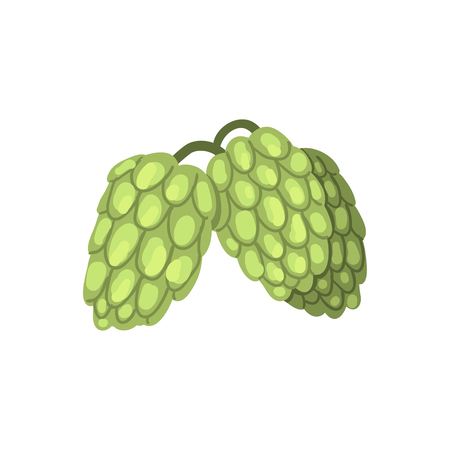 Creen hop cones, humulus lupulus plant, element for brewery products design vector illustration on a white background. Stockfoto - 97827476