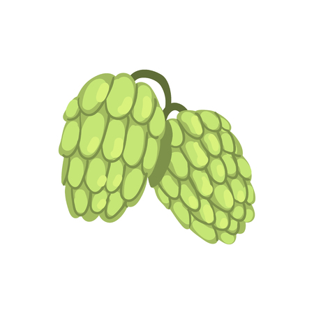 Hops, humulus lupulus plant, element for brewery products design vector illustration on a white background.