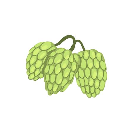 Hops herb plant, element for brewery products design vector illustration on a white background. Illustration