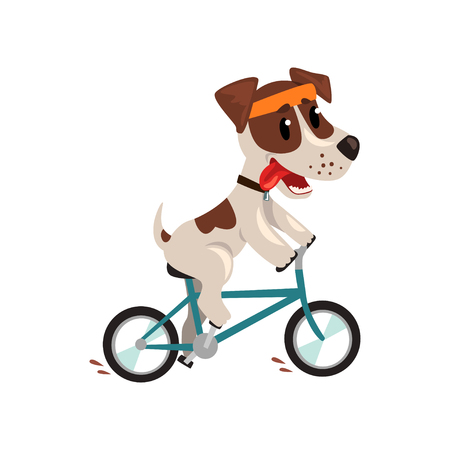 Cute jack russell terrier athlete riding a bike, funny sportive pet dog character doing sports vector illustration on a white background.