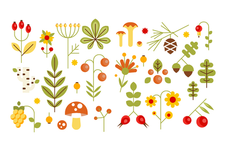 Wild leaves, berries and mushrooms set, forest elements concept vector illustrations on a white background.