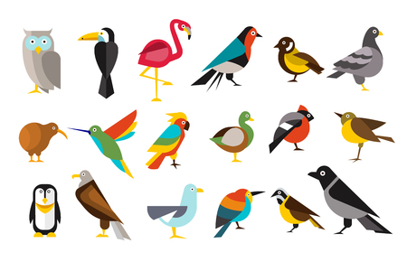 Various bird set colorful vector illustrations on a white background.