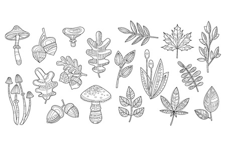 Hand drawn sketch of mushrooms toadstool, amanita  acorns, leaves of oak, maple and other plants. Monochrome vector design for coloring book