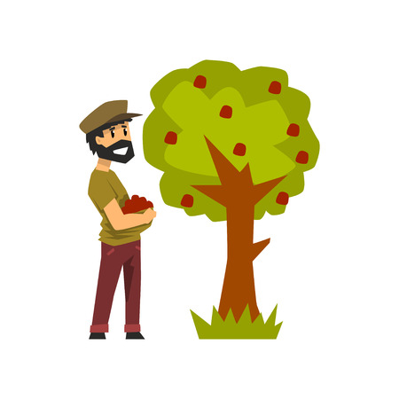 Male farmer picking red apples from tree, gardener at work vector Illustration on a white background Illustration