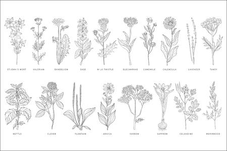 Różne rośliny lecznicze i kwiaty zestaw, monochromatyczny szkic ręcznie rysowane ilustracje wektorowe na białym tle na białym tle.