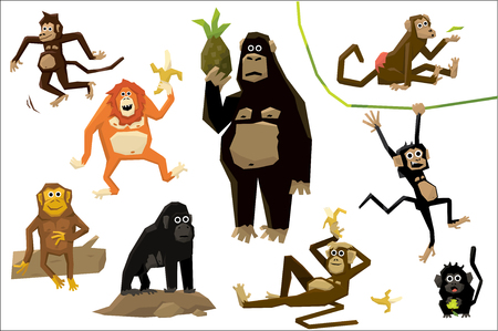Funny monkey set, monkeys of various breeds in different situations vector Illustrations on a white background Vettoriali