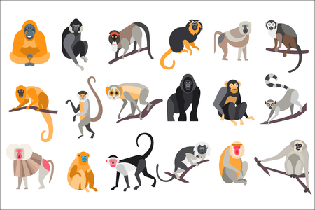 Collection of different breeds of monkeys vector Illustrations on a white background