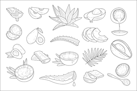 Hand drawn vector set of healthy natural products coconut, avocado and aloe. Elements for cosmetics packaging or advertising poster or flyers of spa or beauty salon