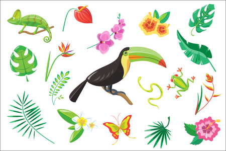 Set of tropical summer elements, flowers, toucan, palm leaves, frog, snake, chameleon vector Illustration isolated on a white background.