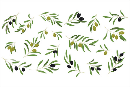 Set of branches with ripe olives and green leaves. Symbol of peace. Natural and healthy food. Design for book illustration, oil or cosmetic product label. Cartoon flat vector icons isolated on white.