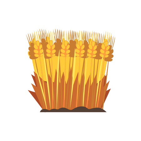 Field of ripe wheat, design element for bakery vector Illustration on a white background Çizim