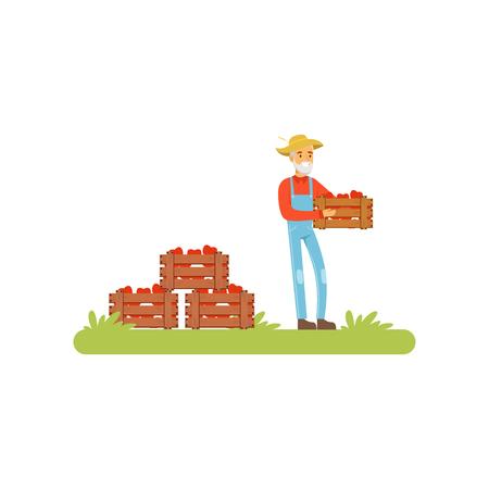 Farmer standing holding wooden crate full of apples, farmer harvesting apples vector Illustration