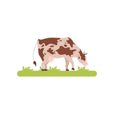 Spotting cow grazing in green meadow vector Illustration isolated on a white background.