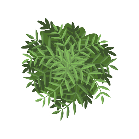 Green bush, landscape design element, top view vector Illustration isolated on a white background.