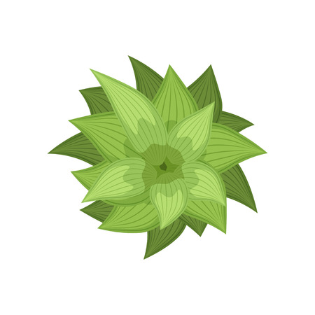 Green plant, landscape design element, top view vector Illustration isolated on a white background.