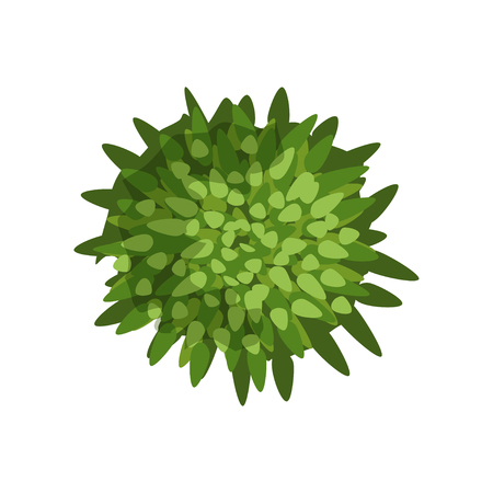 Green plant, landscape design element, top view vector Illustration isolated on a white background. Archivio Fotografico - 100537844