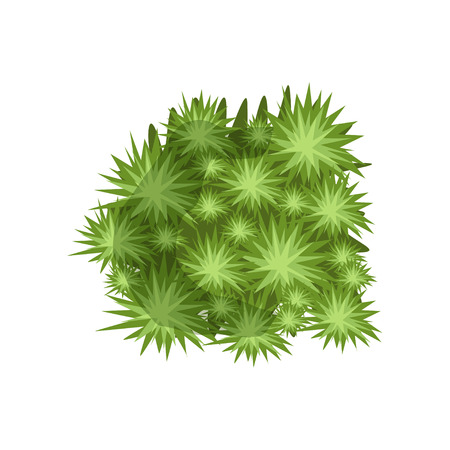 Green plant, landscape natural design element, top view vector Illustration.