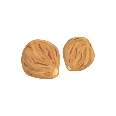 Nutmeg nut, nutritious natural product vector Illustration on a white background.