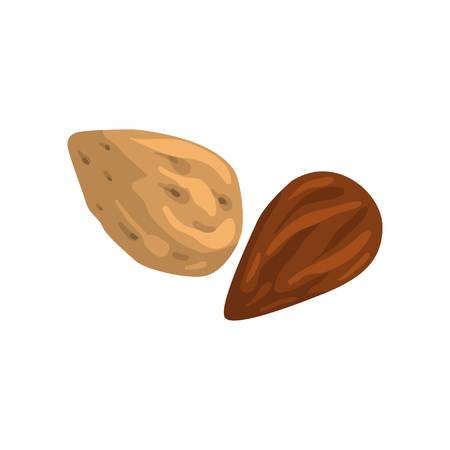 Almond nut, nutritious natural product vector Illustration on a white background.