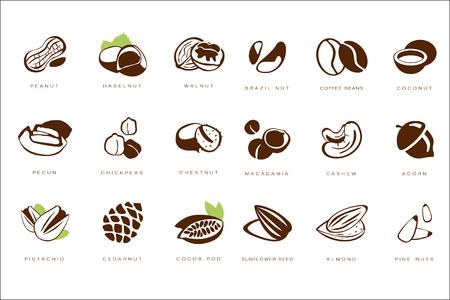 Named nuts set illustration on white background.