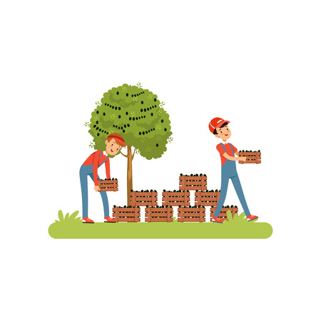 Farmers harvesting olives, workers carrying wooden crates full of ripe olives vector Illustration on a white background Banque d'images - 100828208