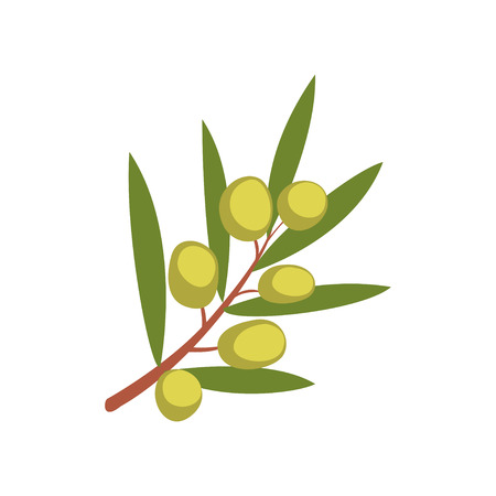 Olive tree branch vector Illustration on a white background