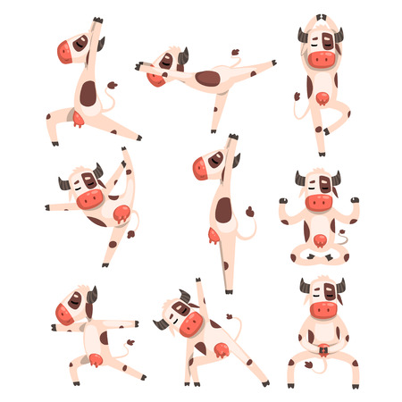 White spotted cow set, farm animal character doing sport exercise vector Illustrations isolated on a white background.