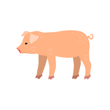 Cute cartoon little pig standing, side view vector Illustration on a white background Illustration
