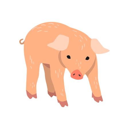 Little funny pig cartoon