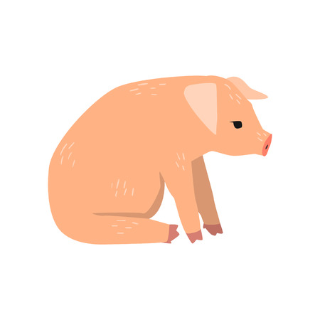 Little funny pig sitting on the floor, side view cartoon