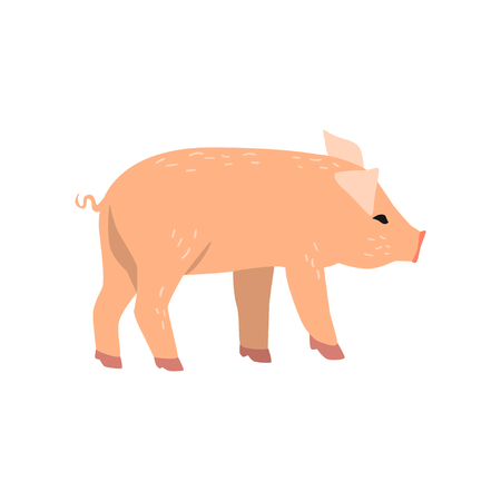 Little funny pig, side view