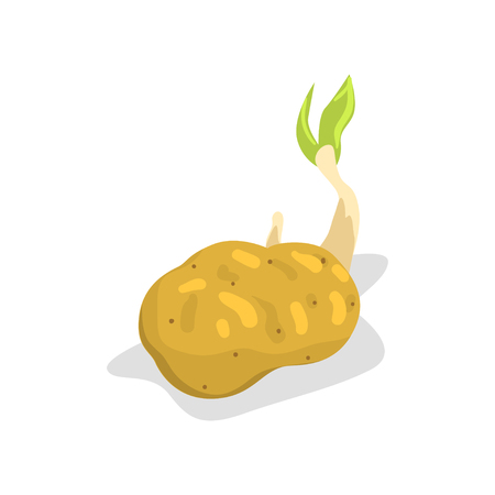 Potato with green sprout, healthy organic food concept vector Illustration isolated on a white background. Illustration