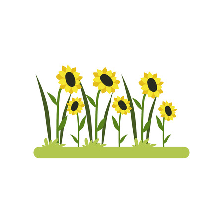 Sunflower field vector Illustration isolated on a white background. Foto de archivo - 101368154