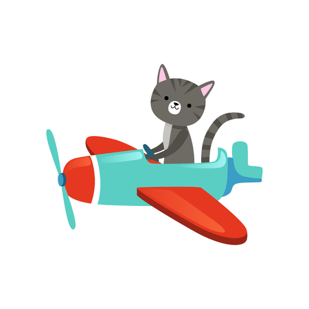 Gray kitten with cute muzzle flying on colorful airplanes. Cartoon domestic animal character. Flat vector design for childrens print, book or postcard