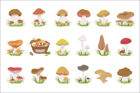 Eatable Mushrooms Realistic Drawings Set